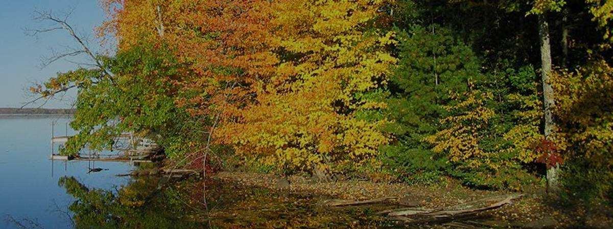 Nelson Lake Association