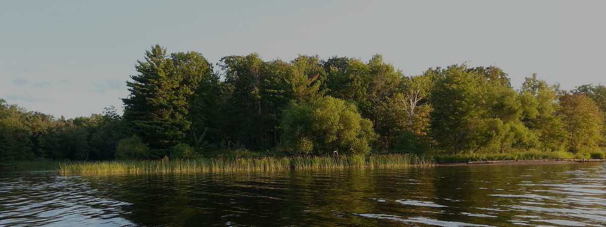 The Nelson Lake Association is one of the strongest and most active lake associations in Sawyer County